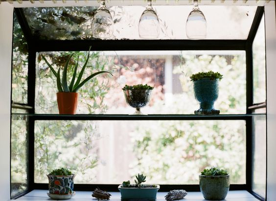Succulent Window Sill