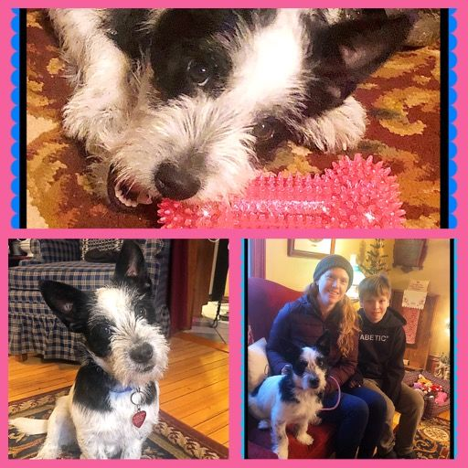 This Is Bryce Foster Dog 87 He Found His Happy Ending In St Paul Mn In 2020 Foster Dog Rescue Puppies Puppy Find