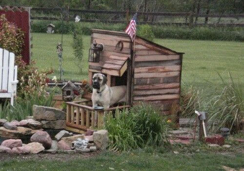 A doggie fort