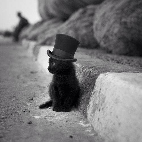 If That Isn't The Cutest Damn Cat In A Hat! - Click for More...: