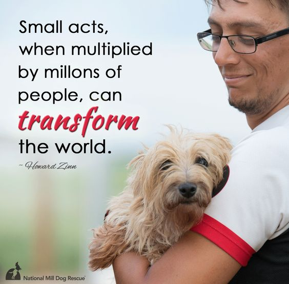 Small acts, when multiplied by millions of people, can transform the world. #adoptdontshop #rescue #NMDR