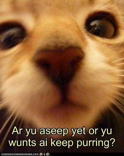 neutering kitten age