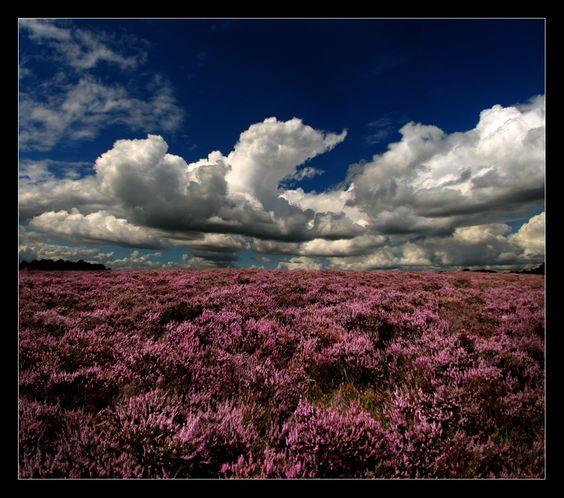 Resultado de imagem para scotland scenic fields