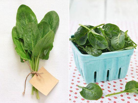 Gartenzauber   Spinat (Spinacia oleracea) - Gartenzauber