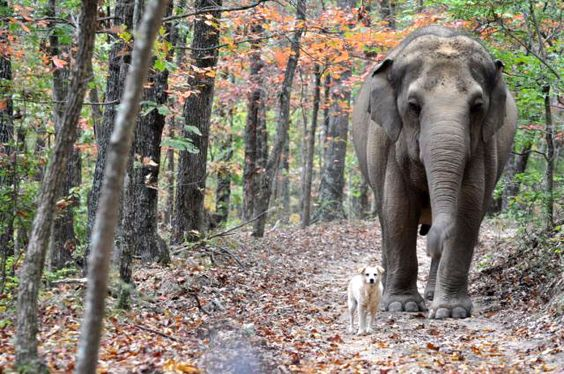 The Elephant Sanctuary in Hohenwald, TN. The nation's largest habitat refuge for elephants who have been retired from zoos & circuses. Amazing.