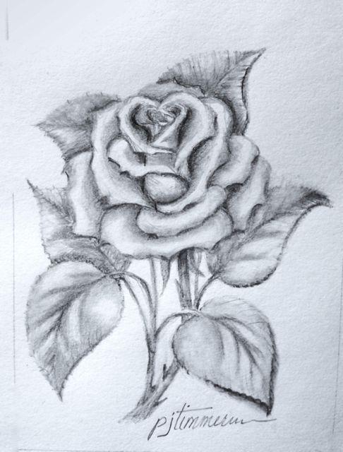 How top draw a rose homeschool art pinterest rose drawings how top draw a rose homeschool art pinterest rose drawings and sketches ccuart Image collections