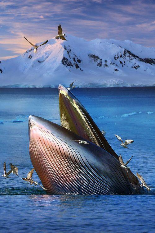 クジラと鳥