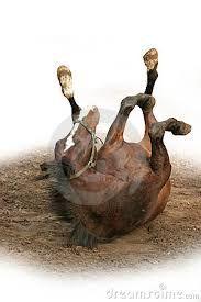 Resultado de imagen para caballo que se revuelca