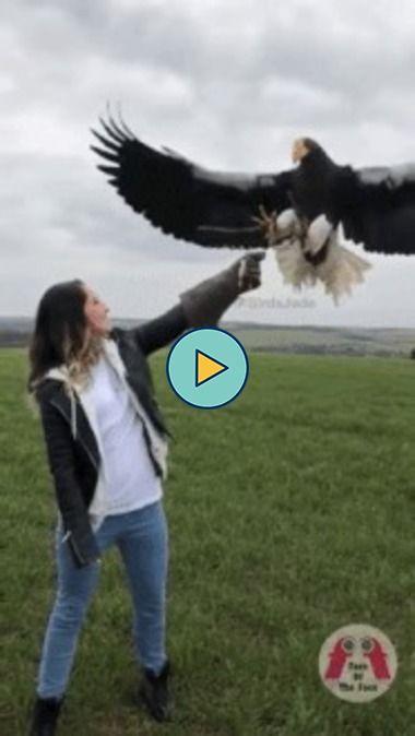 O tamanho desta águia impressiona