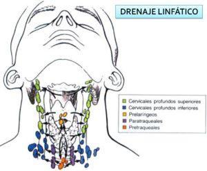 drenaje-linfatico-2