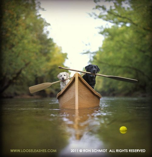 Loose Leashes is a line of fun dog-centric images by photographer Ron Schmidt.