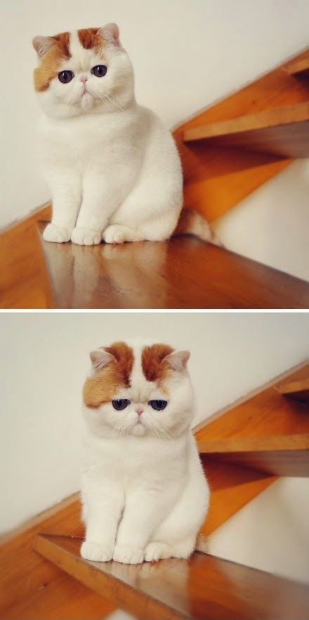 4 Most Furry Cat Breeds http://www.chumcollars.instapage.com/