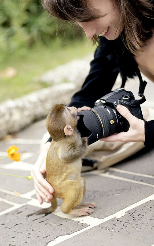 Is there anything cuter than a baby monkey, that is about to rob an unsuspecting tourist?