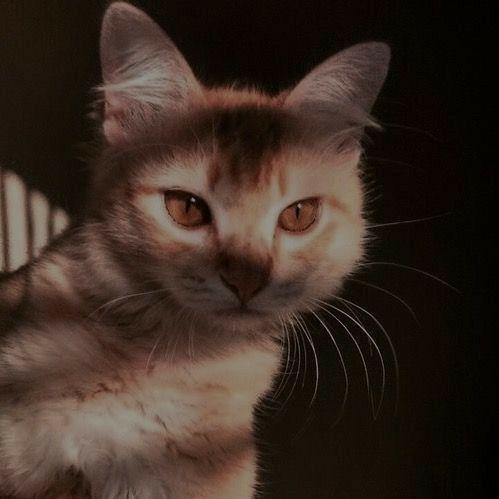 Эстетичный котёнок🌸💓 | Очаровательные котята, Котопес, Кошачьи фотографии