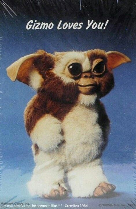 Even look a little like my gizmo