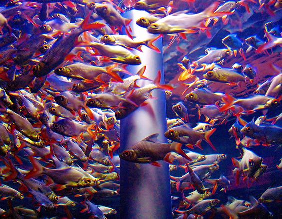 The homestead survival how to start a fish farm raising for How to start a fish farm