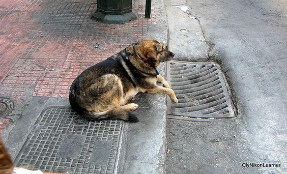 A dog's life...he looks sad:(poor angel