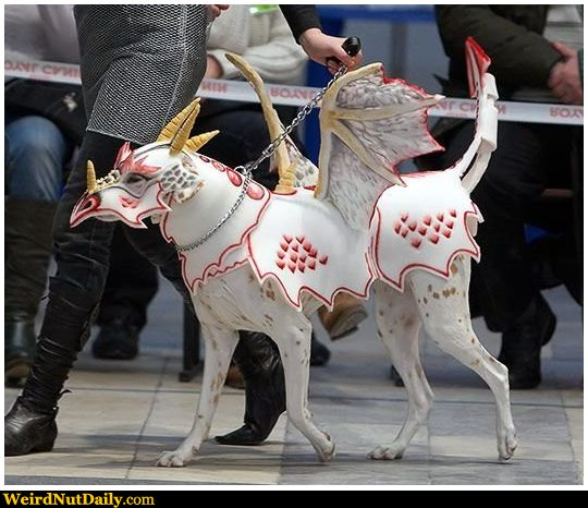 I want this costume for one of my Great Danes! :o)