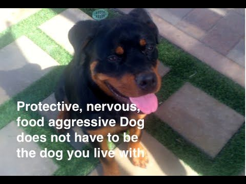 Severe Food Aggression Resource Guarding Before After Dog