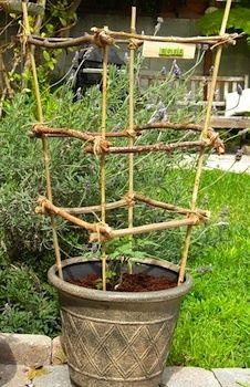 Homework tomato plant stick frame