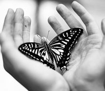 Touched by butterfly wings
