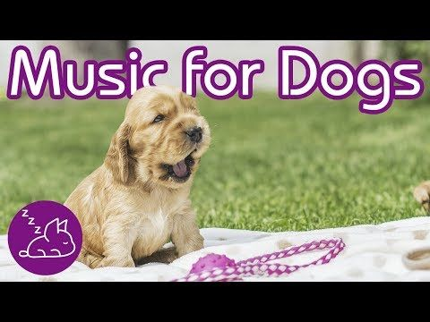 Relax My Dog Relaxing Music For Dogs Youtube Dogs Excited