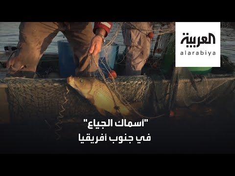 العربية سمك الكارب قوت فقراء جنوب أفريقيا Movie Posters Poster Movies