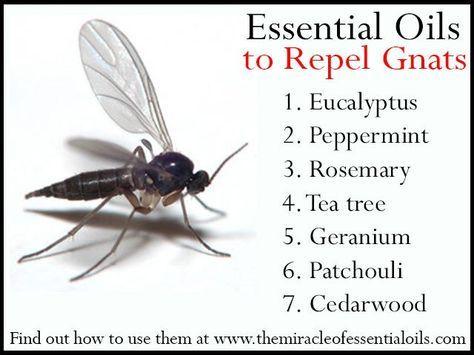 7 Repellent Essential Oils For Gnats Essential Oil Bug Spray
