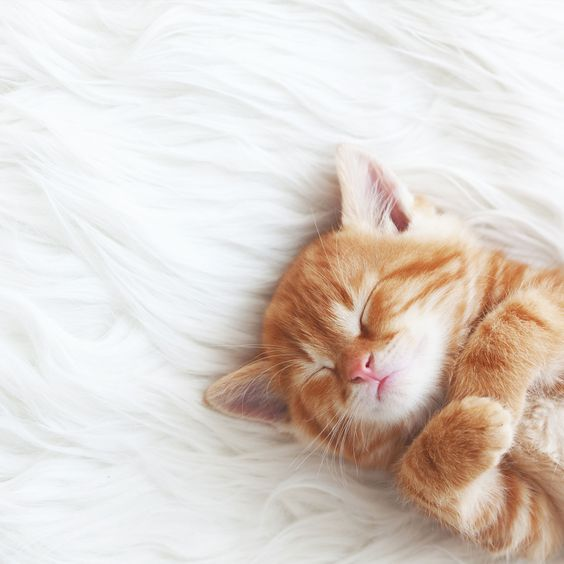 Pin By Loraman Animal Pets On Animals In 2020 Baby Cats Kittens Cutest Sleeping Kitten