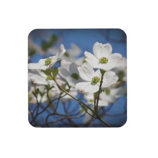 White Dogwood Flowers Drink Coasters  $26.95
