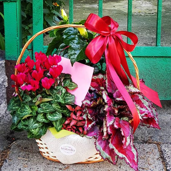 Pin Auf Flowerbox