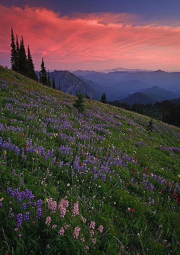 Sunset over Mt. Rainier National Park, Washington. Photography by Bryan Swan.