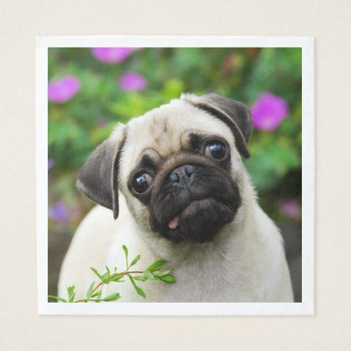 Cute Fawn Colored Pug Puppy Dog Face Pet Photo On Napkin Zazzle