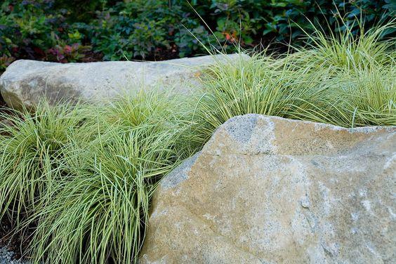 Gardens ornamental grasses and rocks on pinterest for Large grasses for landscaping
