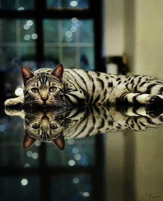 反転する猫