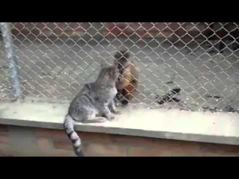 La AMISTAD no tiene barreras - http://dailyfunnypets.com/videos/cats/la-amistad-no-tiene-barreras/ - La AMISTAD se da en todoas partes. - camera, free, phone, sharing, upload, video