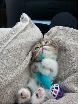 Freekibble Amazing Cats  I'z cute. Don't deneyes it.: