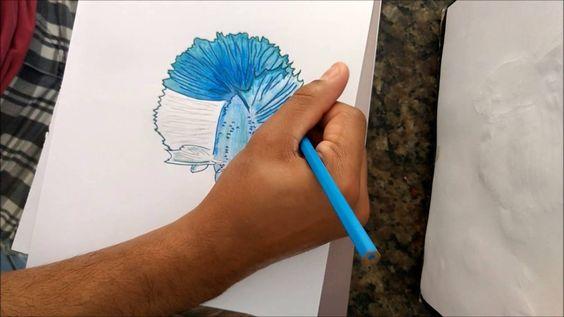 como desenhar um peixe betta