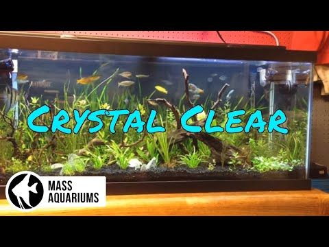 How To Keep Crystal Clear Water In Your Aquarium Clean Fish Tank Water Youtube Cleaning Fish Fish Tank Cleaning Freshwater Aquarium Fish