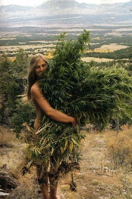 What is wrong with weed?