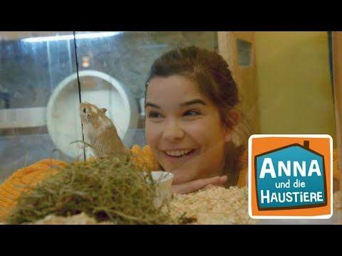 Ein Tag Im Heim Fur Rennmause Information Fur Kinder Anna Und Die Haustiere Youtube In 2020 Haustiere Rennen Anna