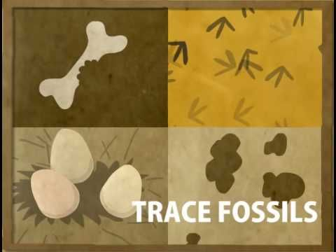 Fossil video - cartoon - how they are formed
