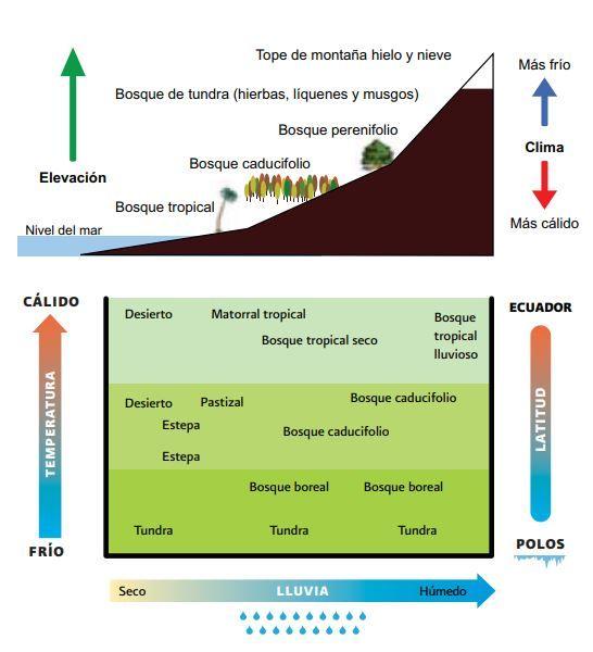 Bosque Qué Son Ubicación Geográfica Y Tipos De Bosques Ovacen Tipos De Bosques Bioma Bosque Bioma Terrestre