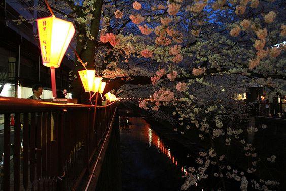 Sakura 2013, via Flickr.