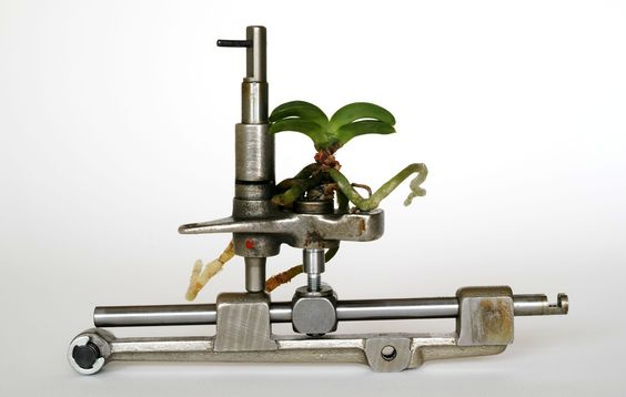ikebana201509:: Neofinetia falcata +a machine part(富貴欄+機械部品)‐⒈