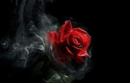 Image Result For Black Roses 4k Wallpaper Hd Flower Wallpaper Dark Red Roses Dark Wallpaper