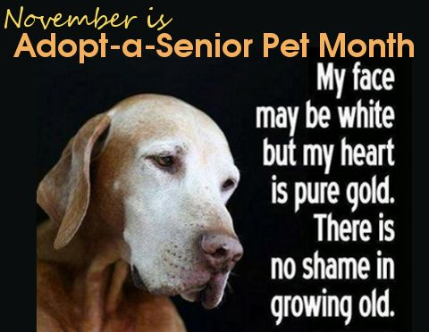 Adopt a senior pet. It breaks my heart when parents insist on buying puppies for their kids and won't even consider saving a life by adopting an older pet. Older pets are usually better behaved and require less training than puppies yet are almost always over-looked in shelters and many never get a home before passing away or being pts. We have 3 senior dogs (out of 6) and I wouldn't trade their snowy faces for anything.: