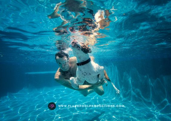 captures underwater austin underwater underwater dogs underwater ...