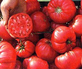 Only the best seeds - Bobby Seeds online shop - Olena Ukrainian, tomato (OG)…