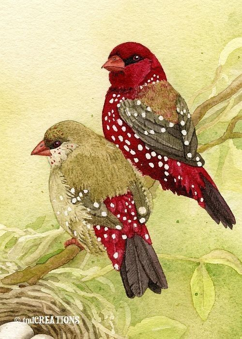 Love finches: Watercolor Birds, Art Watercolor, Finch Family, Beautiful Painting, Art Birds, Archival Watercolor, Bird Art, Beautiful Birds, Animal:
